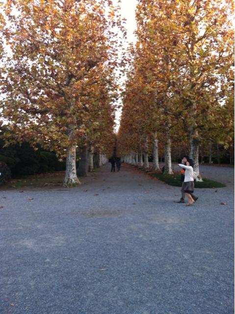 新宿御苑 並木道
